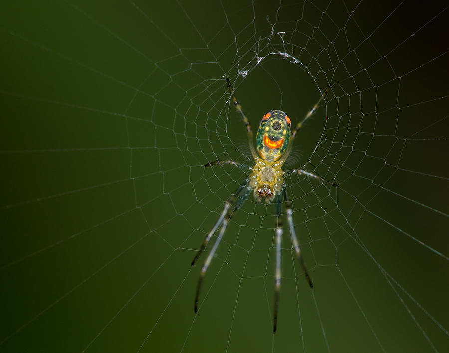 Spider Photograph - Spider In Mexico by Brian Magnier