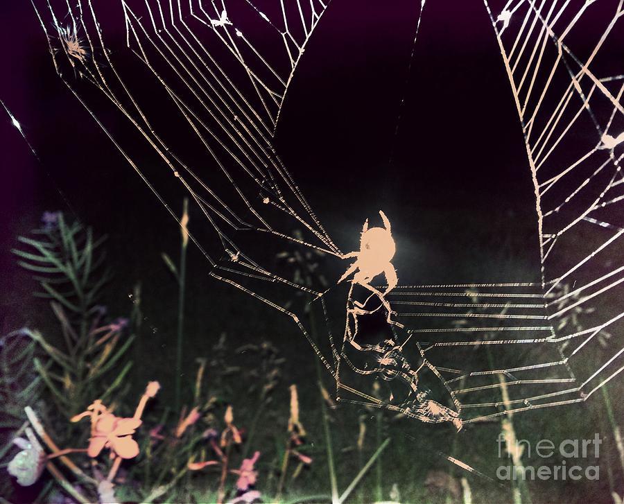 Photograph Photograph - Spider by Jennifer Kimberly