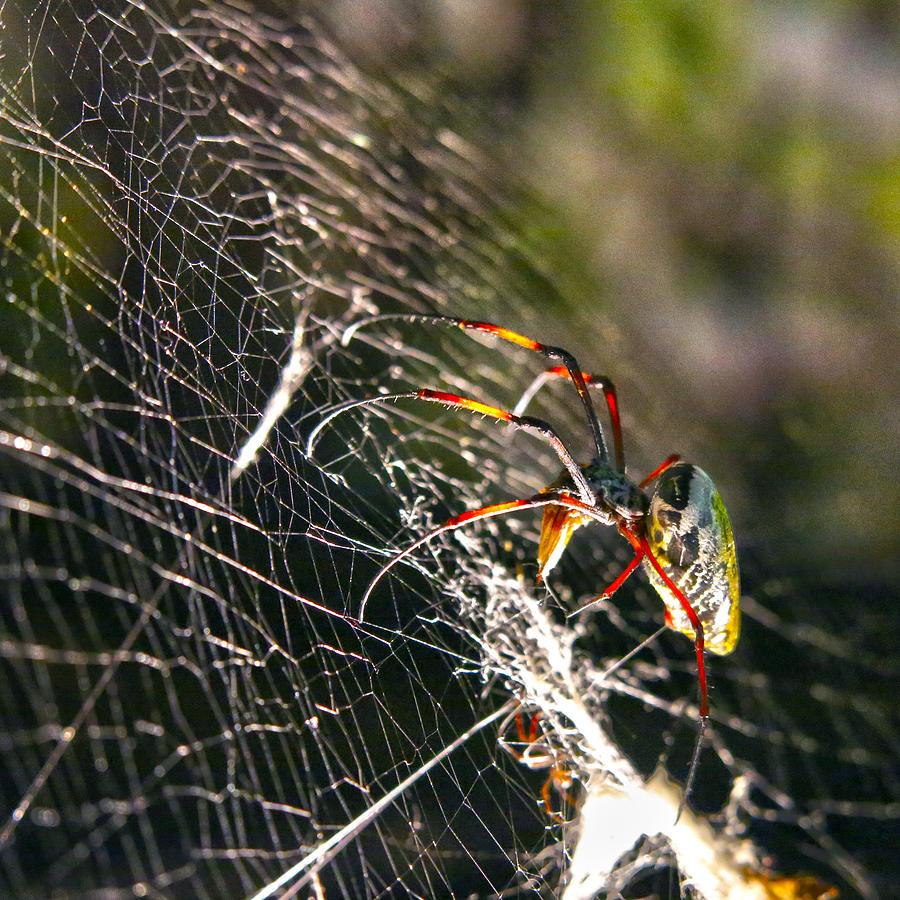 Spider Photograph - Spider by Mitch Cat