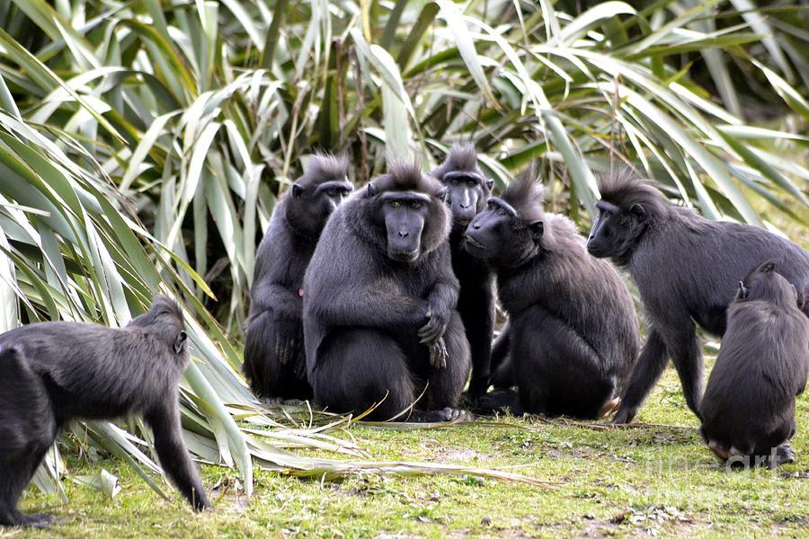 картинки группы обезьян