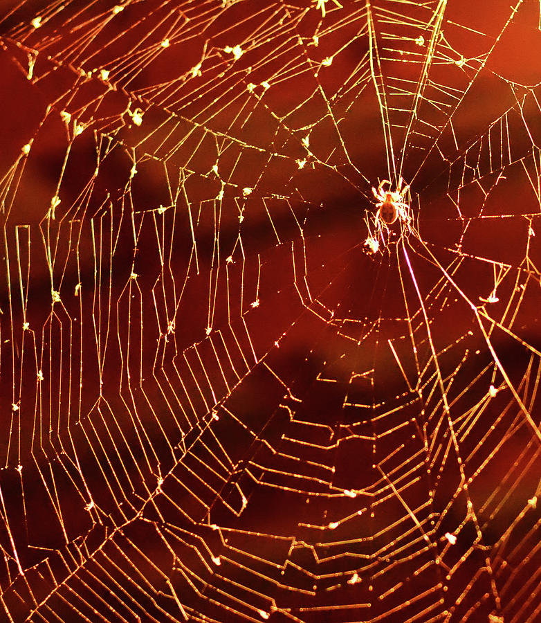 Spider Net Against Red Background Photograph by Jeff R Clow