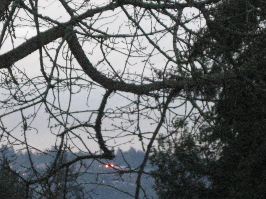 Spider Tree Photograph