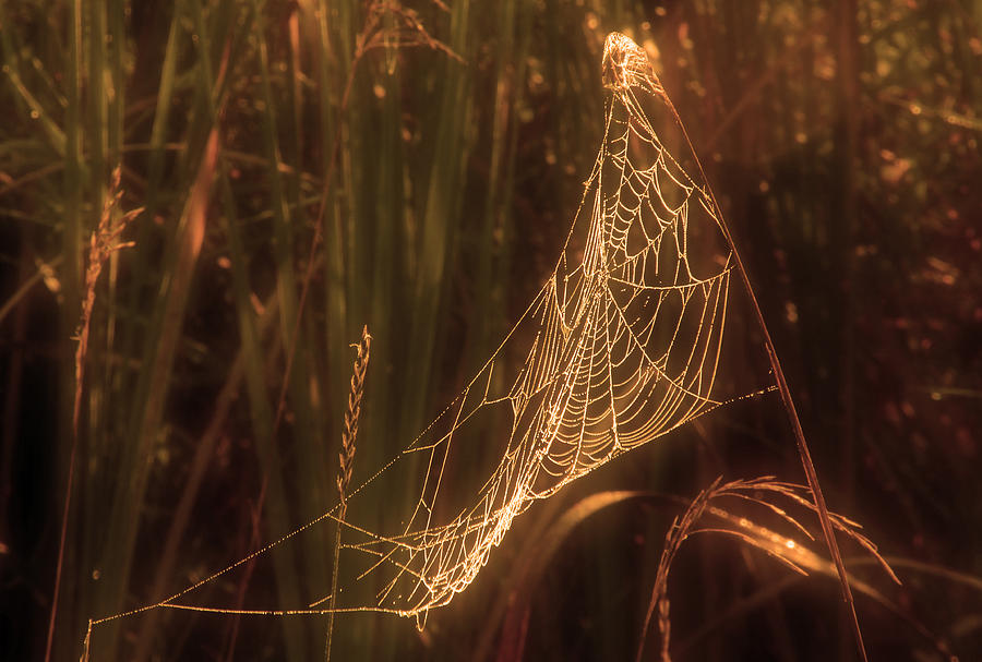 Spider Web A Photograph by Jim Vance