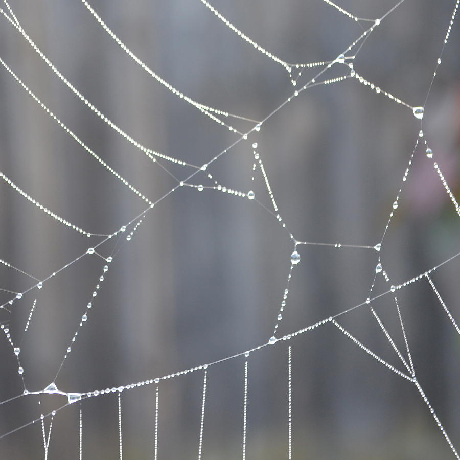 Raindrops Photograph - Spider Web In Rain by Cheryl Miller