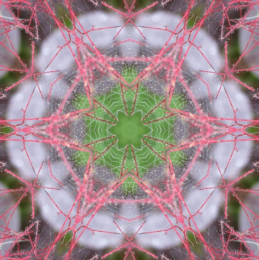 Spider Web on Smokebush by Trina Stephenson