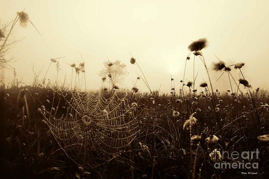 Spider Web Photograph - Spider web with dew by Dan Friend