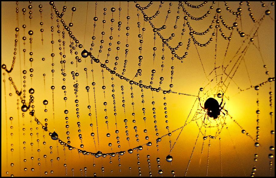 Spiders Heaven