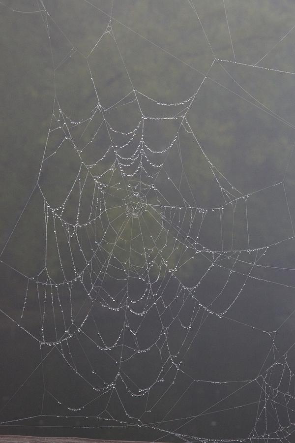 Concord Photograph - Spiderweb by Allan Morrison