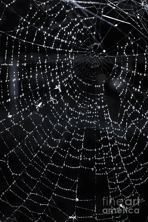Web Photograph - Spiderweb by Elena Elisseeva
