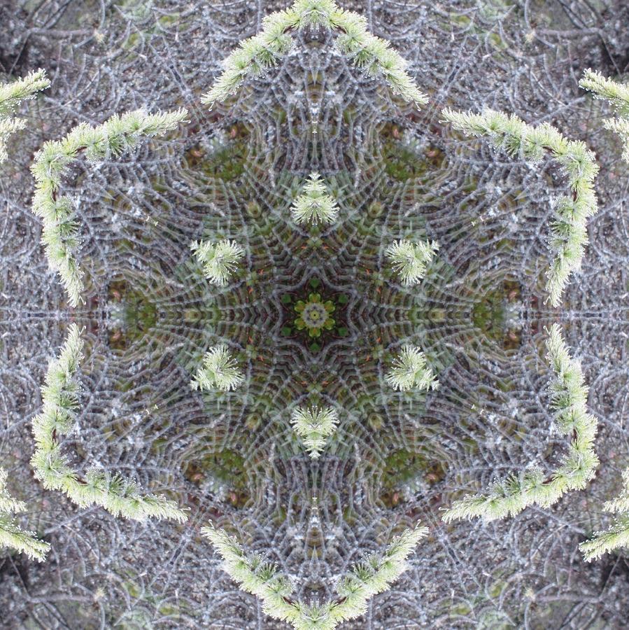Spiderweb Pattern by Trina Stephenson