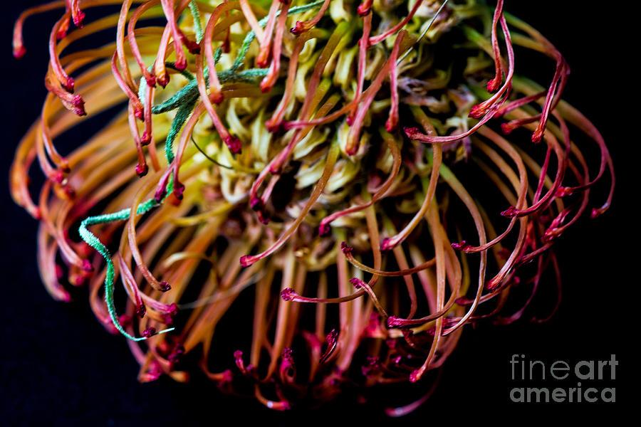 Spiky Flower Photograph - Spiky Flower by Mina Isaac