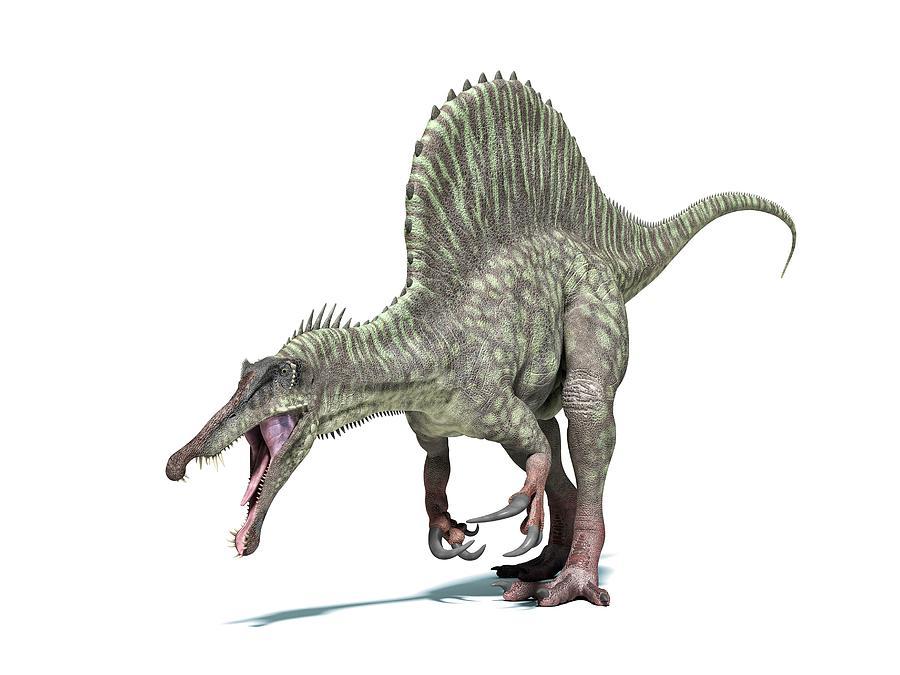 Spinosaurus Dinosaur, Artwork Digital Art by Leonello Calvetti