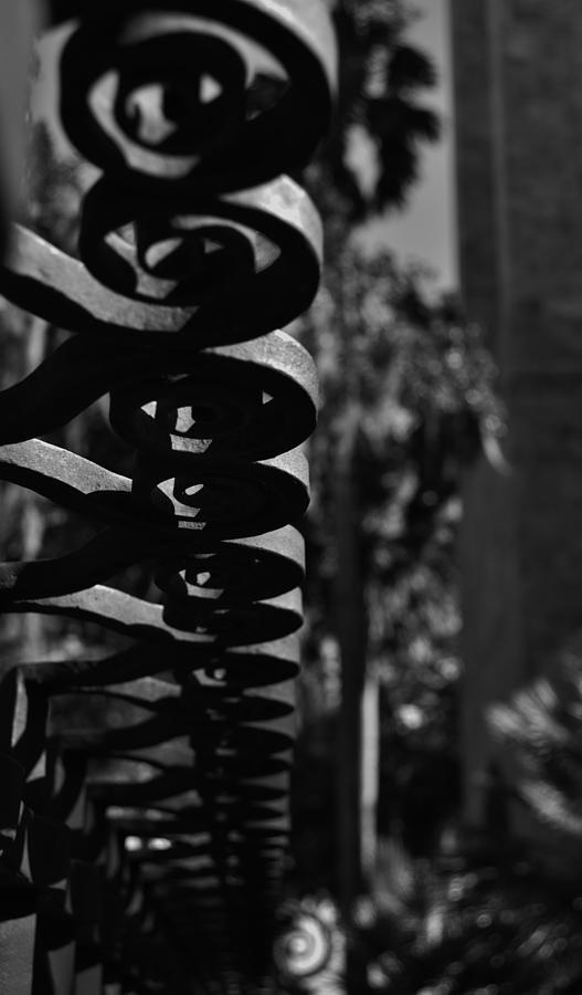 Macro Photograph - Spiraling  by Tara Miller