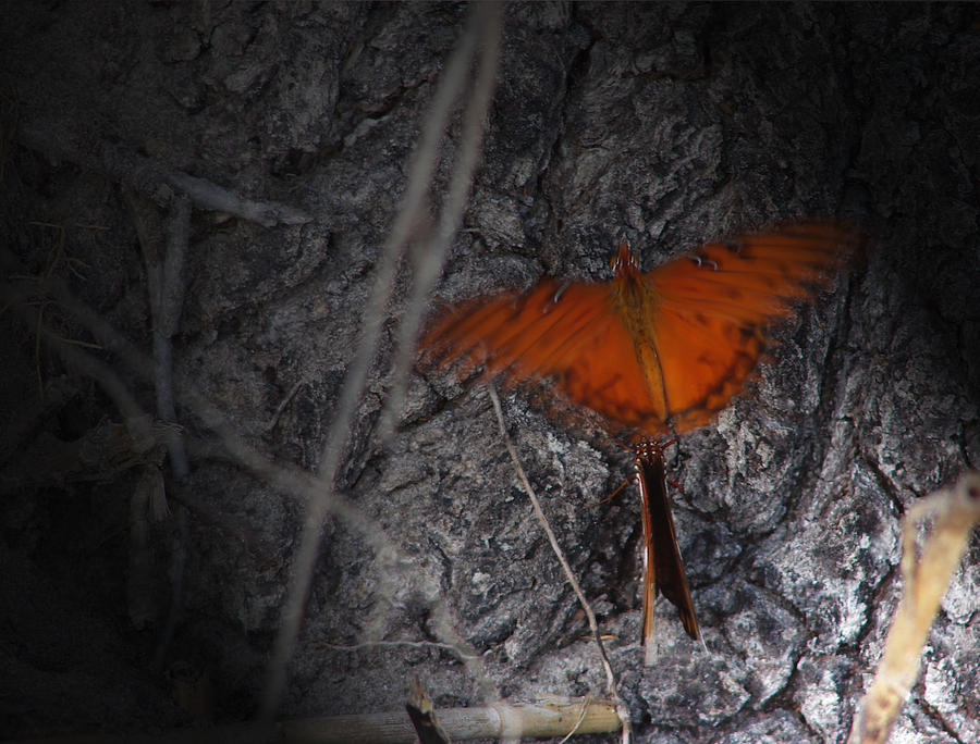 Photograph Photography Photograph - Spirit Butterfly by Ella Char