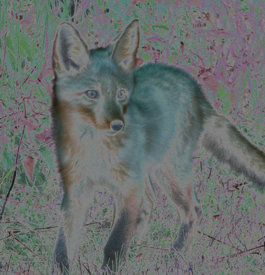 Spirit Fox by Aurora Levins Morales