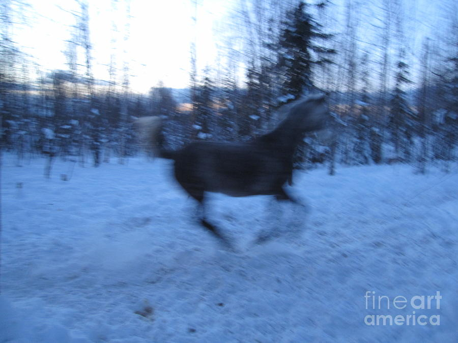 Horse Photograph - Spirit Horse by Elizabeth Stedman
