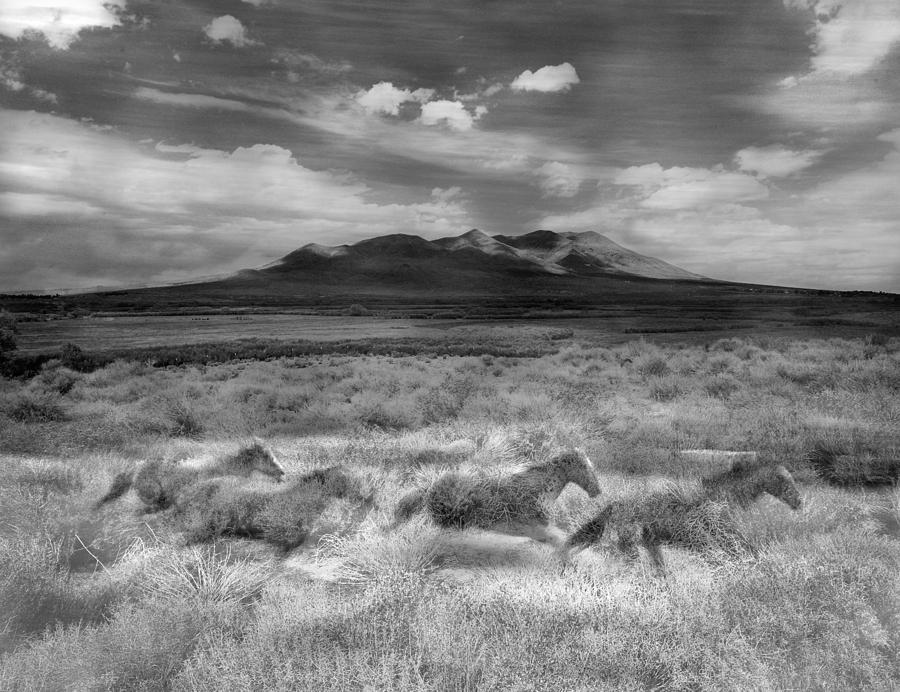 Landscape Photograph - Spirit Horses by Dianne Arrigoni