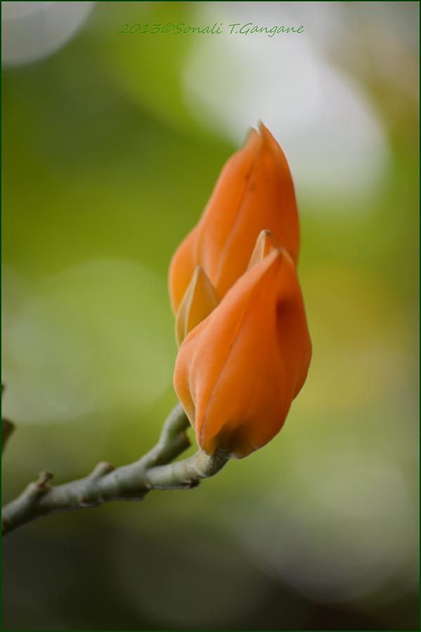 Spring Photograph - Spirit Of Spring by Sonali Gangane