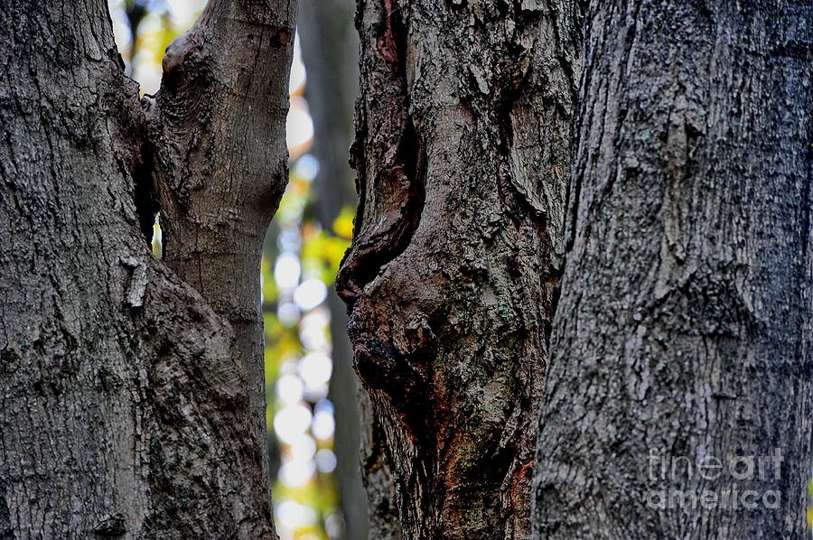Tree Photograph - Spirit Of The Forest by Andrea Kollo