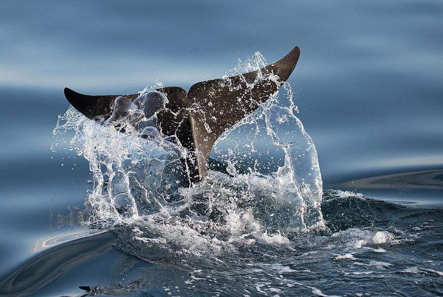 Tail Photograph - Splash by C.s. Tjandra