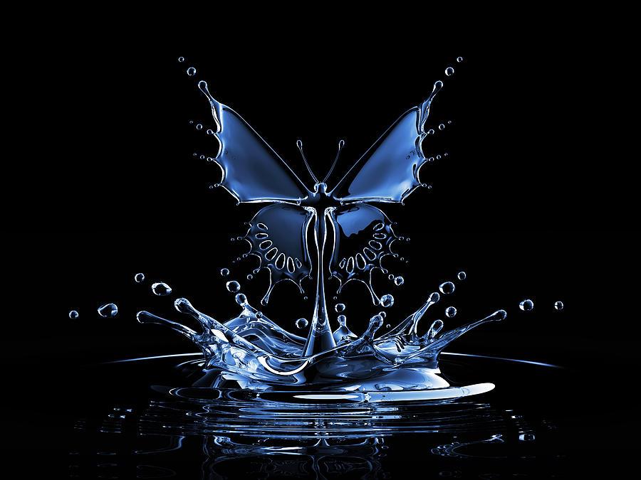 Splash Of Water Butterfly Photograph by Blackjack3d