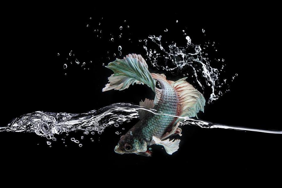 Fish Photograph - Splash by Shikhei Goh