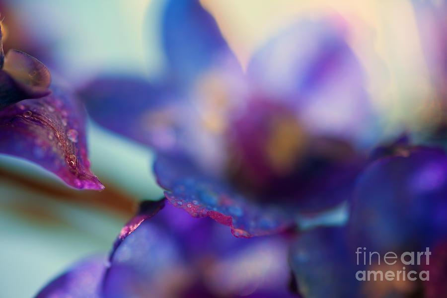 Color Photograph - Splash by Sue OConnor