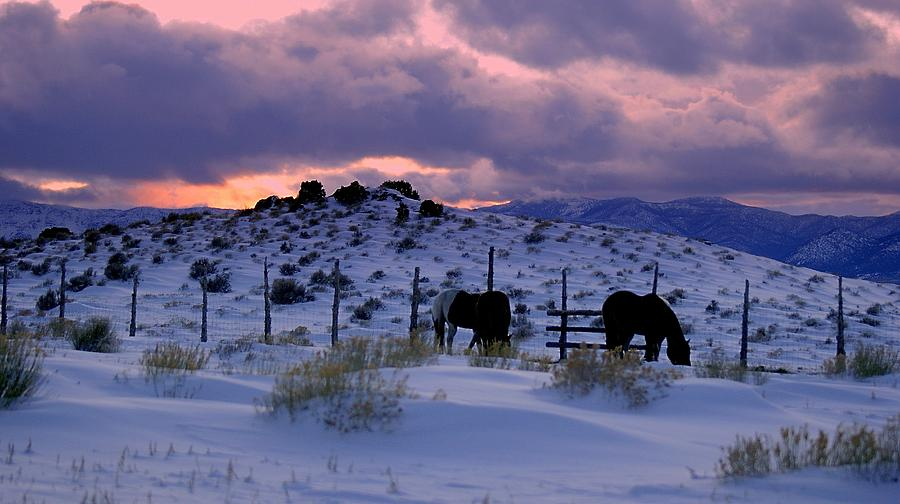 Wild Horses Photograph - Splendor Of Winter  by Jeanne  Bencich-Nations