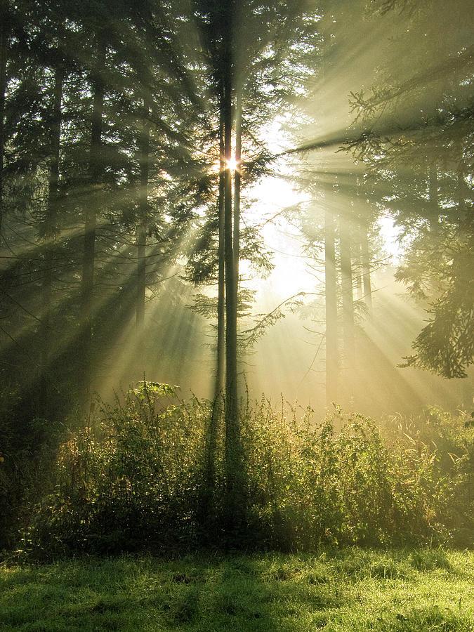 Nature Photograph - Splendour by Daniel Csoka
