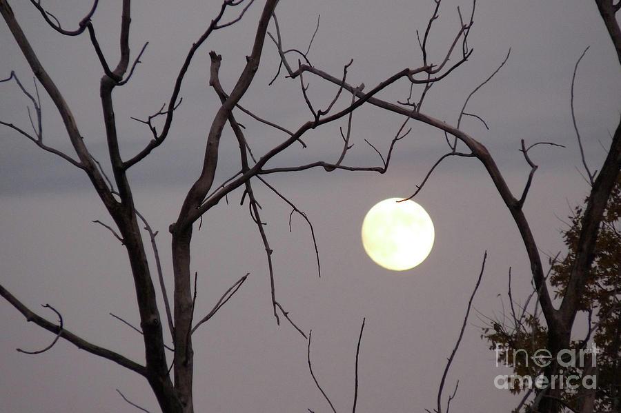 Illinois Photograph - Spooky Moon by Deborah Smolinske