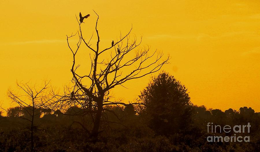 Sunset Photograph - Spooky Tree by Joseph Williams