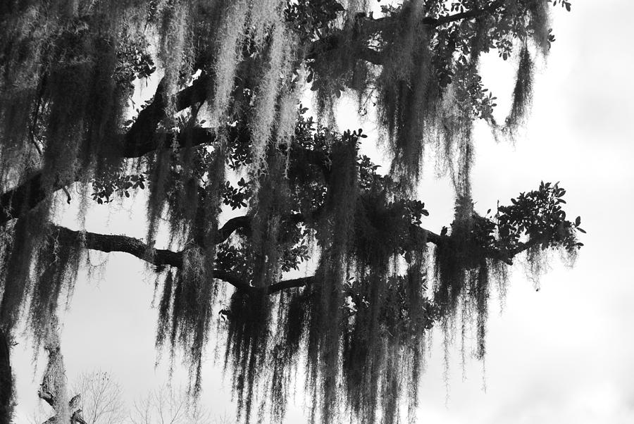 Black And White Photograph - Spooky Trees by Cyndi Lenz