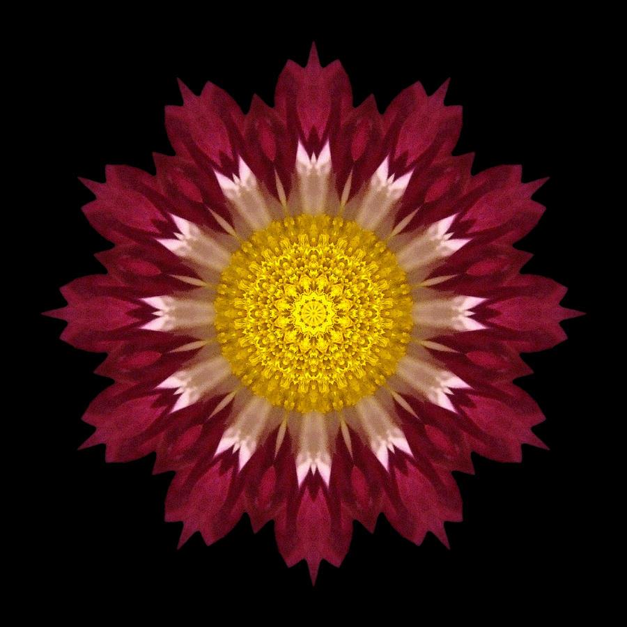 spoon chrysanthemum i flower mandala photograph by david j