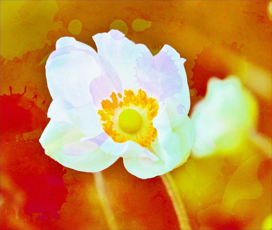 Anemones Photograph - Spot Of Color by Cathie Tyler