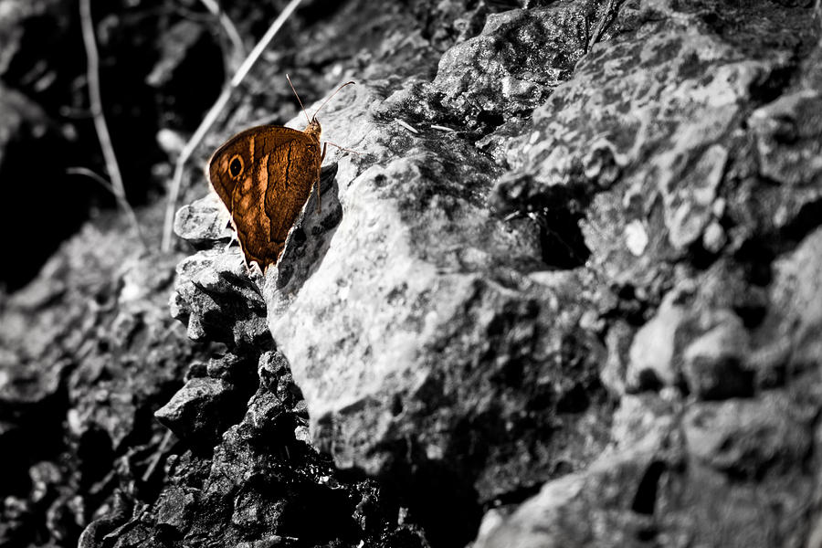 Butterfly Photograph - Spot Of Color by Nadya Ost