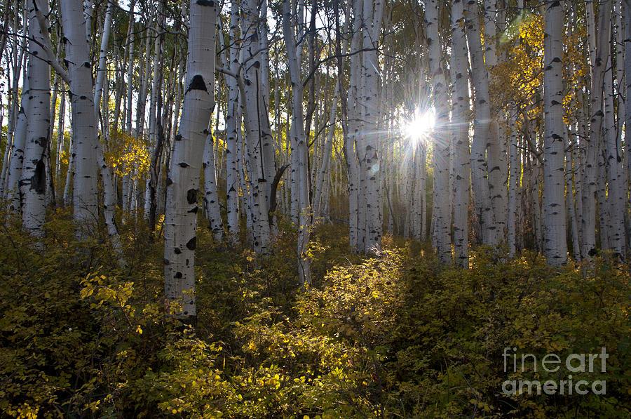 Aspen Photograph - Spot Of Sun by Jeffrey Kolker
