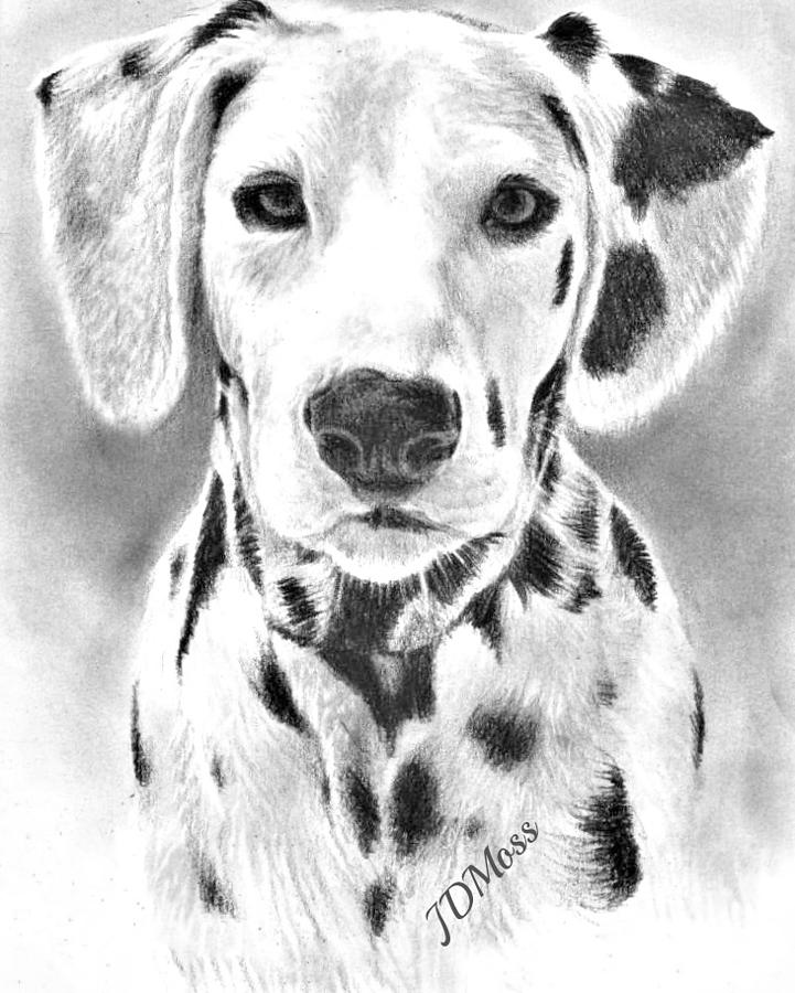 Dogs Drawing - Spots Everywhere by Janet Moss