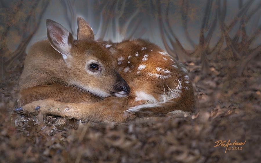 Fawn Photograph - Spotted Innocence by Don Anderson