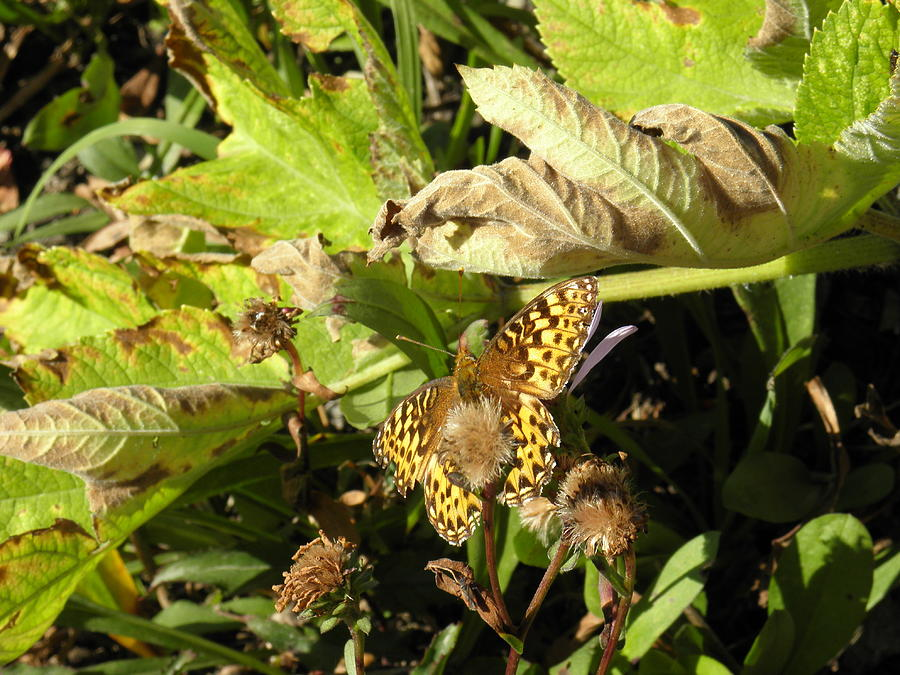 Spotted Yellow Wings Photograph by Charles Vana