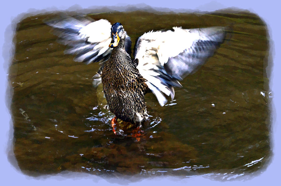 Animal Photograph - Spread Your Wings by Susan Leggett