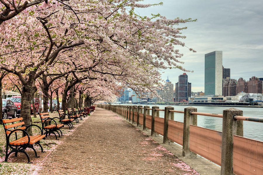 Nyc Photograph - Spring Along The East River by JC Findley