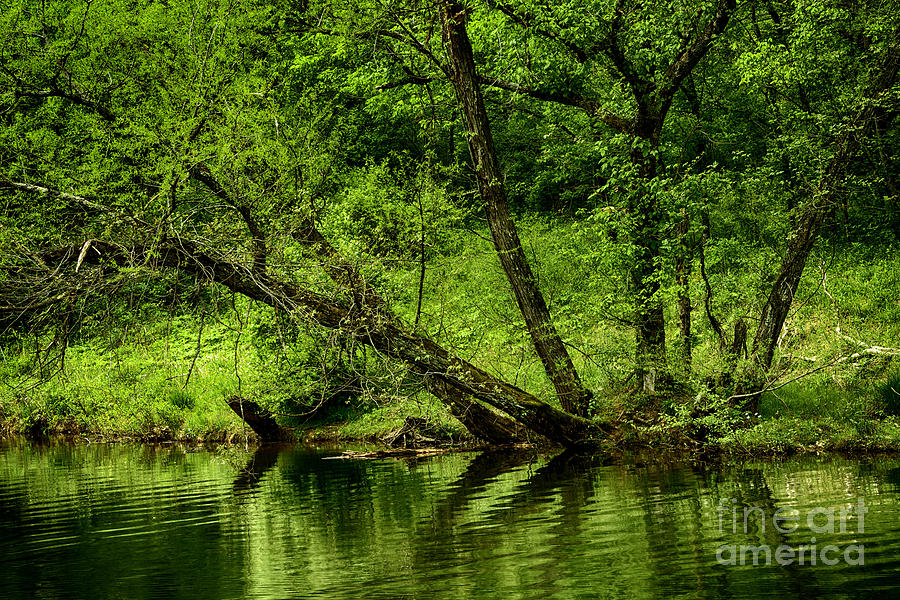 Spring Photograph - Spring Along West Fork River by Thomas R Fletcher