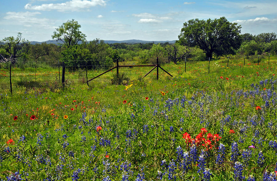 Texas Photograph - Spring At Its Finest  by Lynn Bauer