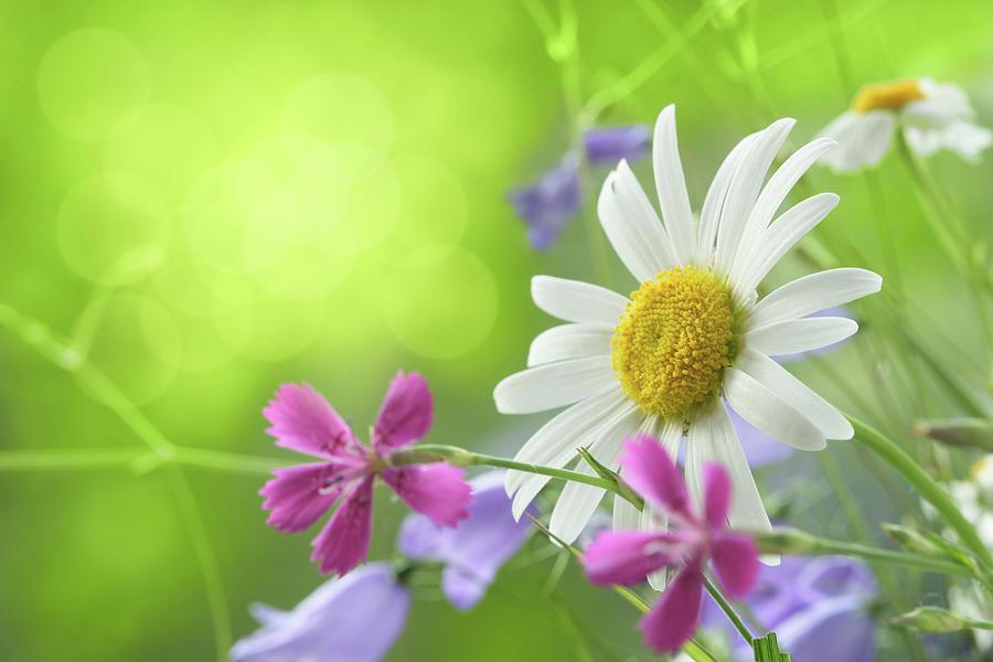 Spring Background Photograph by Pobytov