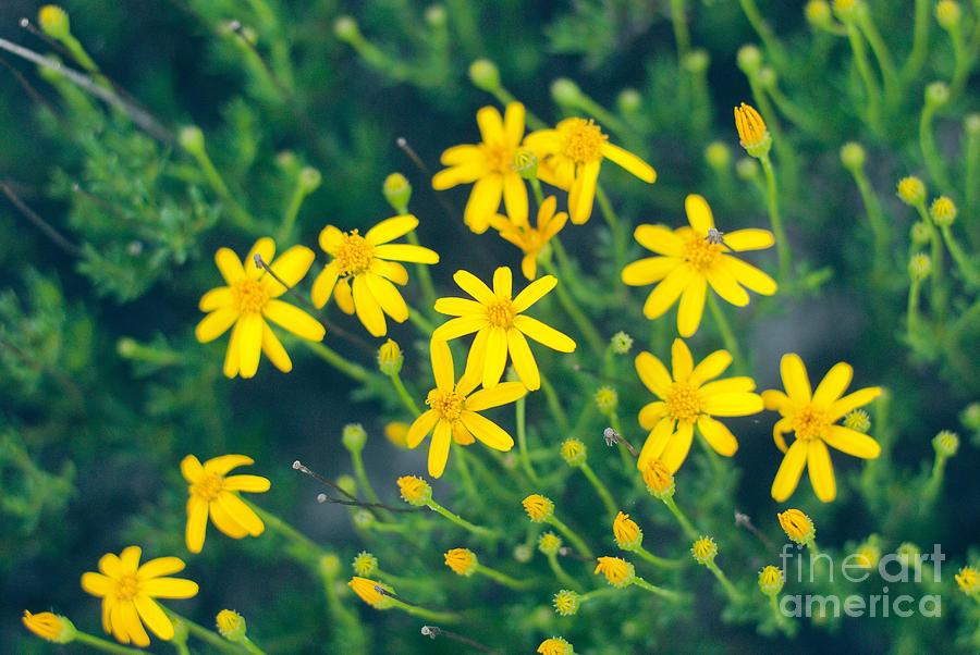 Yellow Photograph - Spring by Barbara Shallue