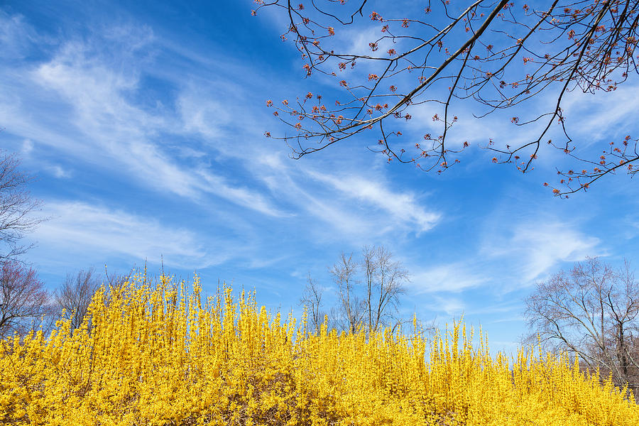 Spring Photograph - Spring by Bill Wakeley
