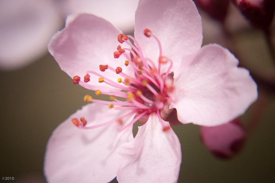 Flowers Photograph - Spring Blooms 6697 by Timothy Bischoff