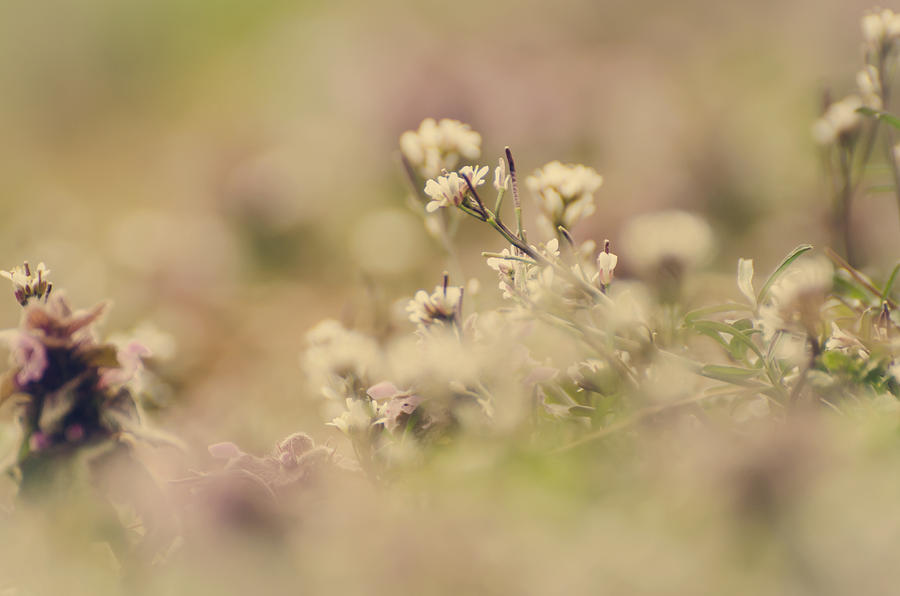Flower Photograph - Spring Blossoms by Heather Applegate