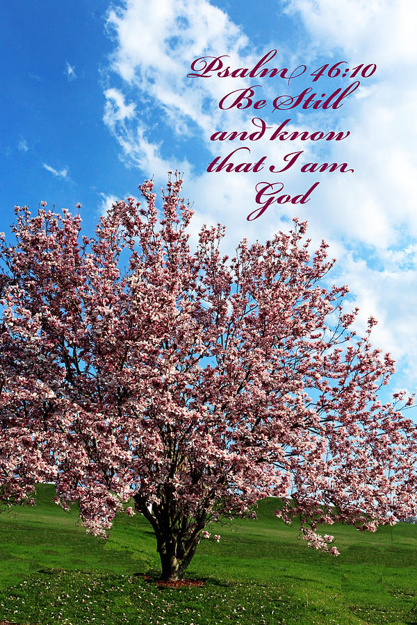 Spring Blossoms with Scripture by Lorna R Mills DBA  Lorna Rogers Photography