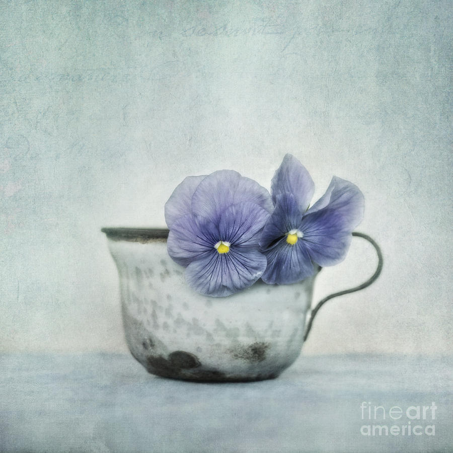 Pansy Photograph - Spring Blues With A Hint Of Yellow by Priska Wettstein
